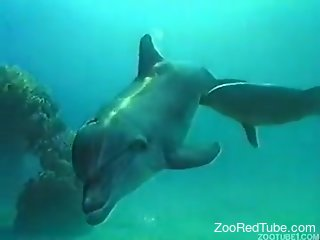 Two sexy dolphins are screwing hot right in the beautiful ocean